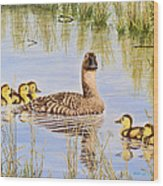We're Coming - Canvasback And Brood Wood Print