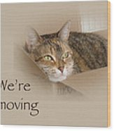 We're Moving Notification Greeting Card - Lily The Cat Wood Print