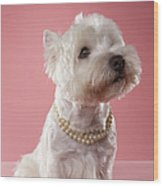 West Highland Terrier Wearing Pearl Necklace Wood Print