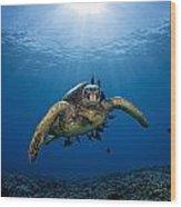 West Maui Sea Turtle Wood Print