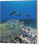 West Maui Sea Turtles Wood Print