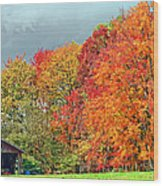 West Virginia Maples 2 Wood Print