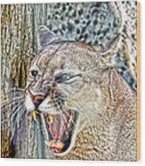 Western Cougar Wood Print
