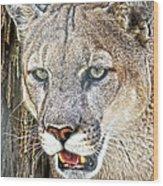 Western Mountain Lion Wood Print