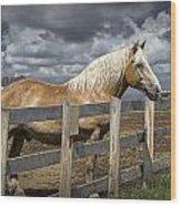 Western Palomino Horse In Alberta Canada No.1335 Wood Print