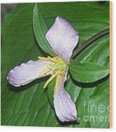 Western Wake Robin Trillium Ovatum Wood Print