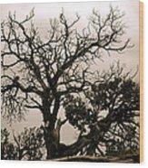 Western Winter Tree Wood Print