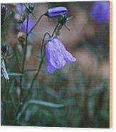 Wet Bellflower Wood Print