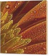 Wet Blumen Wood Print