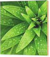 Wet Foliage Wood Print by Carlos Caetano