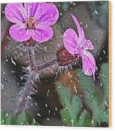 Wet Geranium  Wood Print