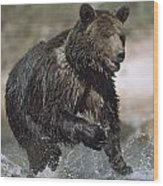 Wet Grizzly Bear Running In Stream Wood Print