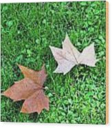 Wet Leaves On Grass Wood Print