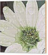 Wet Petals Wood Print