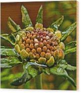 Wet Pinchshin Bud Wood Print