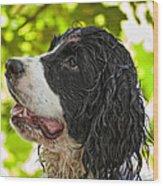 Wet Puppy 2 Wood Print