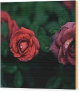 Wet Rose Wood Print by AntonioNatsuki shooting