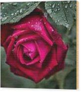 Wet Weather Rose Wood Print