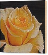 Wet Yellow Rose Wood Print