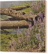 Wetland Beauty Wood Print