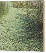 Wetland Shadows Wood Print