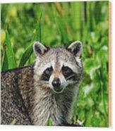Wetlands Racoon Bandit Wood Print