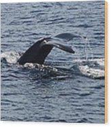 Whale Dive Wood Print