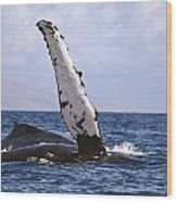 Whale Fin Above Water Wood Print