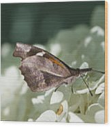 What A Schnoz On That American Snout Butterfly Wood Print