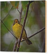 What Warblers Do Wood Print