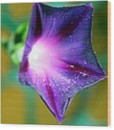 what's the story Morning Glory Wood Print