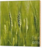 Wheat On The Field Wood Print