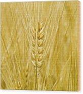 Wheat Wood Print by Paul Rapson