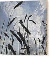 Wheat With Blue Sky Wood Print