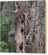 When Woodpeckers Attack Wood Print