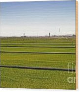 Where The Grass Is Growing Wood Print