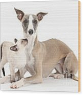 Whippet And Siamese Kitten Wood Print