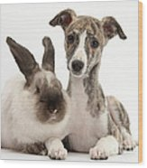 Whippet Pup With Colorpoint Rabbit Wood Print