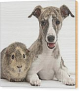 Whippet Pup With Guinea Pig Wood Print