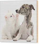 Whippet Puppy And Kitten Wood Print