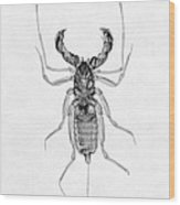Whipscorpion X-ray Wood Print