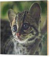 Whiskers Wood Print