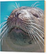 Whiskers Of A Seal Wood Print