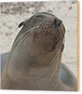 Whiskers On The Face Of A Fur Seal Wood Print
