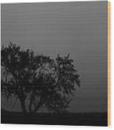 Whisper Of The Elm Wood Print