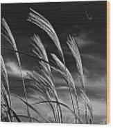 Whispering Wind Wood Print by Dan Crosby