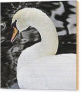 Whistling Swan Wood Print