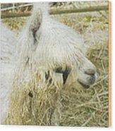 White Alpaca Photograph Wood Print