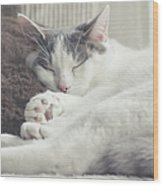 White And Grey Cat Taking Nap On Couch Wood Print