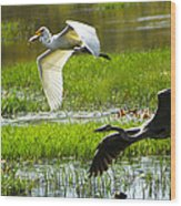 White And Grey Herons In Flight Wood Print